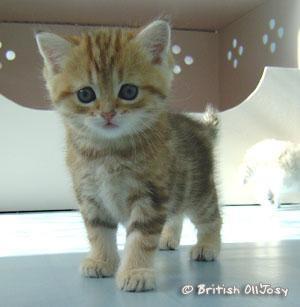 Les chatons - Image de chaton trop mimi ...